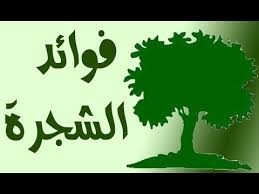 فوائد الشجرة و أهميتها